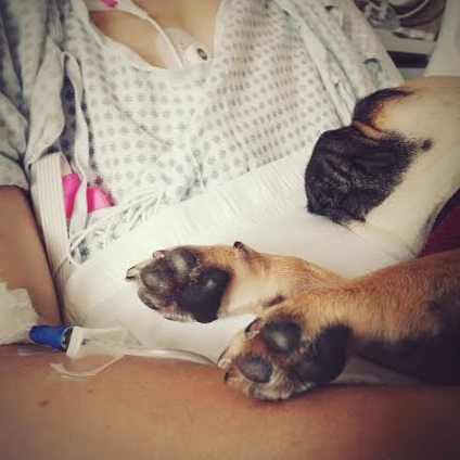 Lancet paws